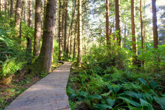 Wood panel walkway curves through redwood forest, ferns in dappl Stock Photo