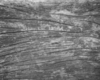 Wood paneler för gammal grunge för bakgrundstextur Royaltyfri Foto