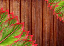 Wood panels and Leaf Stock Photo