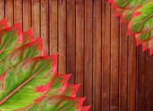 Wood panels and Leaf Stock Photo