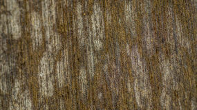 Wood panelyttersida Royaltyfria Bilder