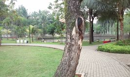 Wood Park. This is Dadap Merah Park, located in Jakarta. Look at the wood, have you find there's a women face Royalty Free Stock Photo