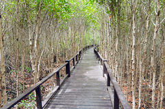 Wood passage way into mangrove forest Royalty Free Stock Photo