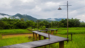 Wood path across rice field and through mountain Stock Photography