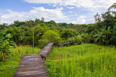 Wood path along rice field and through the mountain Royalty Free Stock Image