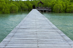 Wood Path At The Mangrove Forest Royalty Free Stock Images