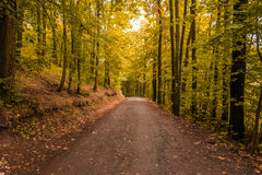 Wood path in the autumn colours Stock Images