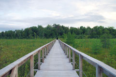 Wood path bridge boardwalk green swamp landscape environment. Nature path wood bridge boardwalk green landscape swamp pathway Stock Photos
