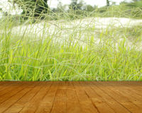 Wood path front of soft green grass. Background stock images