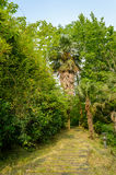 Wood path in garden Stock Photo