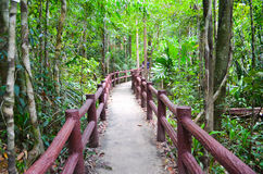 Wood path in jungle Stock Image
