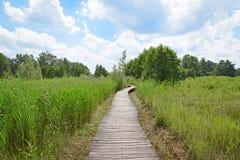 Wood path in nature park Het Beekbergse Woud. Royalty Free Stock Photos