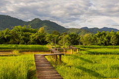 Wood path over rice field and through the mountain Stock Photo