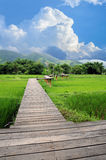 Wood path over rice fields Royalty Free Stock Photo