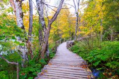 Wood path in the Plitvice lake national park Stock Image
