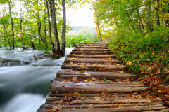 Wood path in the Plitvice national park in autumn Royalty Free Stock Images