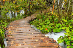 Wood path in the Plitvice national park in autumn Royalty Free Stock Photo
