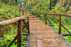 Wood path in the Plitvice national park in autumn Stock Image