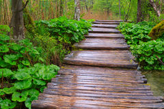 Wood path in the Plitvice national park Stock Image