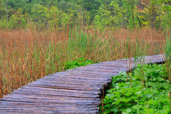 Wood path in the Plitvice national park Royalty Free Stock Image