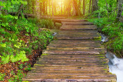 Wood path in the Plitvice national park Stock Images