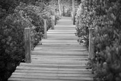 Wood path to deep forest bush Stock Images