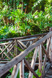 Wood path through tropical forest Stock Photo