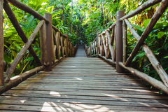 Wood path through tropical forest Royalty Free Stock Images