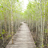 Wood Path Way Among The Mangrove Forest Stock Image
