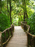 Wood path way among the forest in Doi Inthanon in Chiang Mai Royalty Free Stock Photos