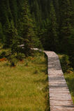 Wood path way among the a green forest Stock Photos