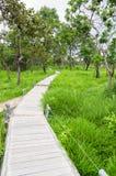 Wood path way. Stock Photography