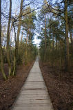 Wood path way among the trees of Curonian Spit Royalty Free Stock Photos