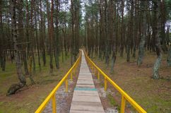 Wood path way among the trees of Curonian Spit Royalty Free Stock Image