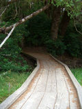 Wood Path in Woods Stock Images