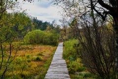 Wood pathway throug a fen Stock Photography