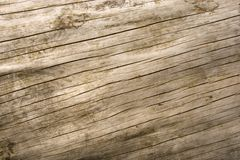 Wood Pattern. On a weathered log Royalty Free Stock Image