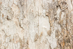 Wood pattern abstract. Royalty Free Stock Image