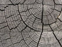 Wood pattern background Royalty Free Stock Image