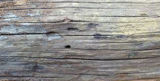 Wood pattern. Old hardwood pattern texture background Royalty Free Stock Photos