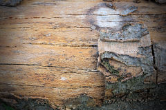 Wood pattern texture background. Old wood pattern texture background Royalty Free Stock Image