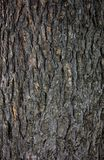 Wood pattern on a tree royalty free stock images