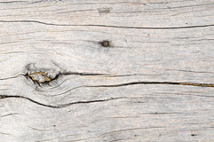 Wood Pattern Trunk Texture Stock Images