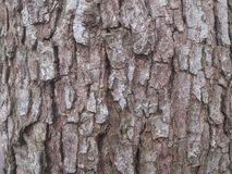 Wood peel of the old tree. Royalty Free Stock Photography