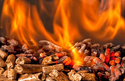 Wood pellet Royalty Free Stock Image