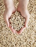 Wood pellets. Man holding Wood Pellets (used as fuel) in his hands Royalty Free Stock Image