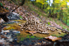 Wood pellets. Alternative fuel: Wood pellets, made from sawdust and other industrial wood waste Stock Photos