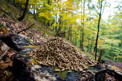 Wood pellets. Alternative fuel: Wood pellets, made from sawdust and other industrial wood waste Stock Image