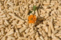 Wood pellets and flower. Wood pellets green energy and orange flower Stock Image