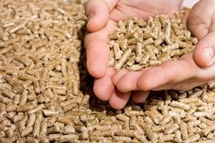 Wood pellets in hand close up .Biofuels. Biomass Pellets, from s. Awdust stock photography